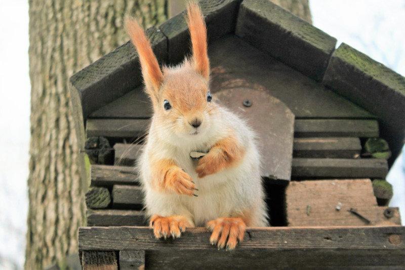 Homel. W parku pałacowym aż roi się od wiewiórek. Fot. Jerzy S. Majewski